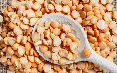 렌틸콩의 효능과 렌틸콩 다이어트 식단 추천